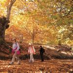 Un paseo por el Bosque de Cobre de Málaga