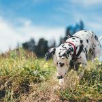 Guía perruna Málaga: dónde ir con mi perro en Málaga
