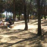 A la sombra de los pinos, de los pinos de Torremolinos