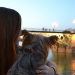 Qué hacer con tu perro en Sevilla